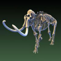 3D model of a mammoth